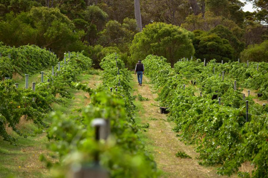 Vineyards in Margaret River by Lauren Trickett